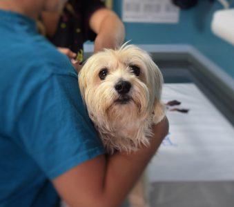 Foto von Tierpflege an einem Hund