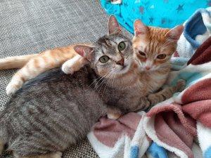 zwei katzen aloe vera